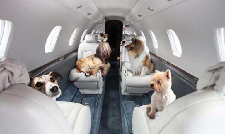 سگ های مسافر